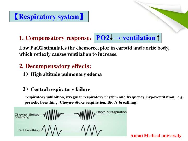 【Respiratory system】