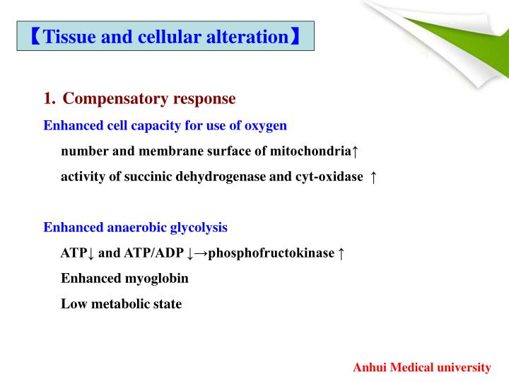 【Tissue and cellular alteration】