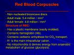 red blood corpuscles