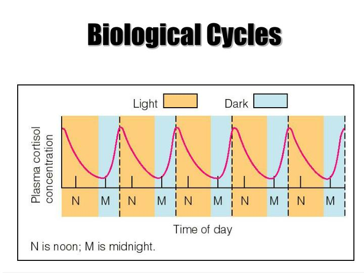 Biological Cycles
