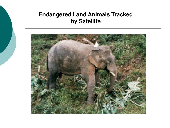Endangered Land Animals Tracked by Satellite