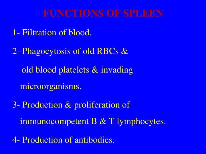 Ppt Lymphoid Tissue Objectives Powerpoint Presentation Id4500623