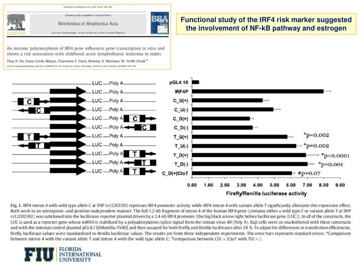 Functional study of the IRF4 risk marker suggested the involvement of NF-kB pathway and estrogen