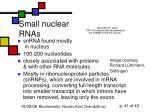 small nuclear rnas
