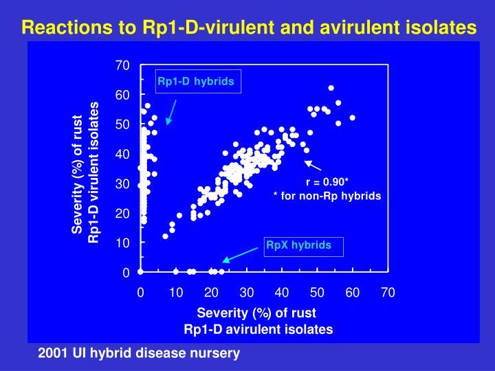 Reactions to Rp1-D-virulent and avirulent isolates