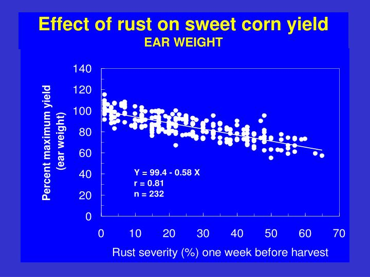 Effect of rust on sweet corn yield
