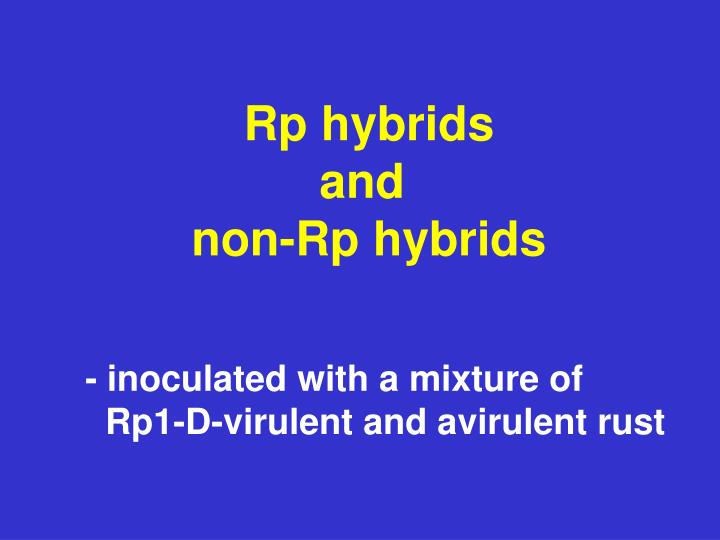 Rp hybrids