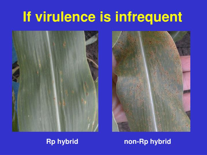 If virulence is infrequent