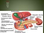 parts head neck body tail