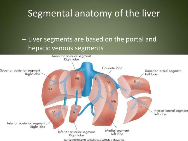 Ppt Liver Gallbladder Powerpoint Presentation Id4504876
