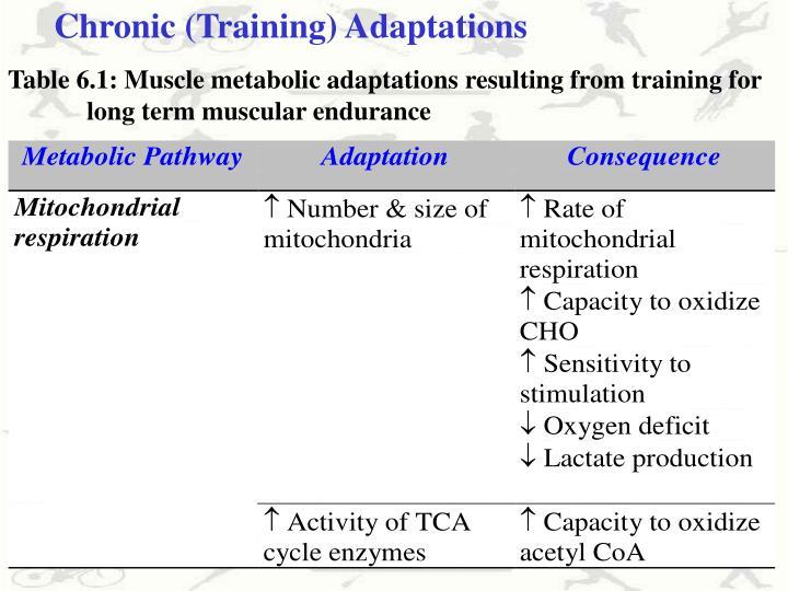 Chronic (Training) Adaptations