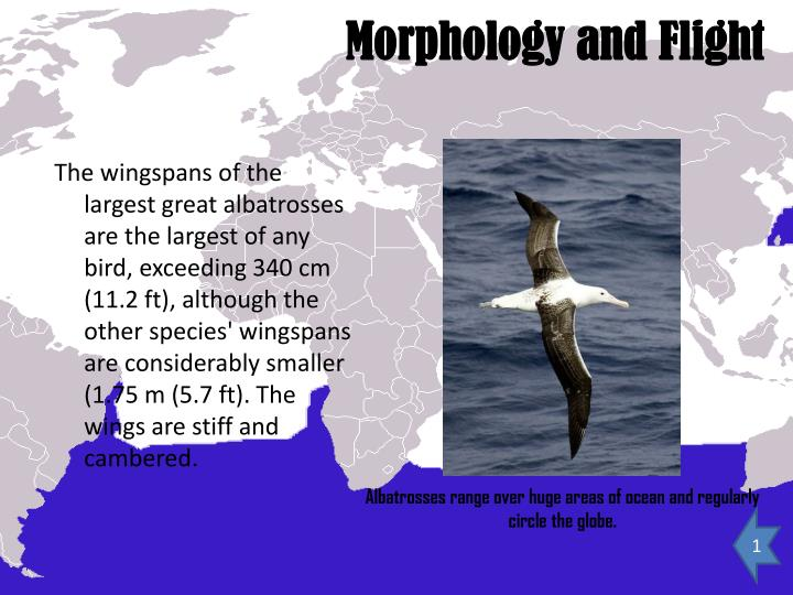 Morphology and Flight