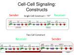 cell cell signaling constructs