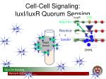 cell cell signaling luxi luxr quorum sensing