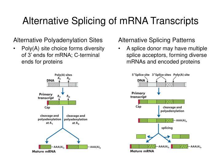 rna splicing and processing pdf