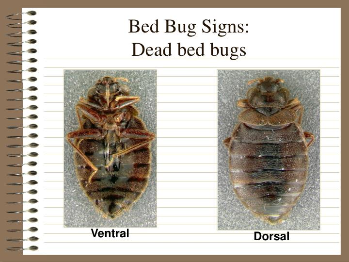Bed Bug Signs: