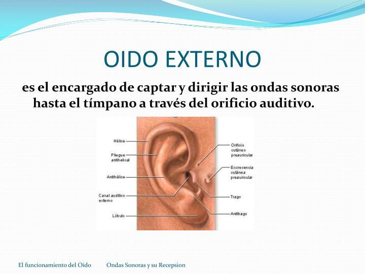 Oido externo
