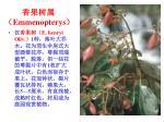 emmenopterys