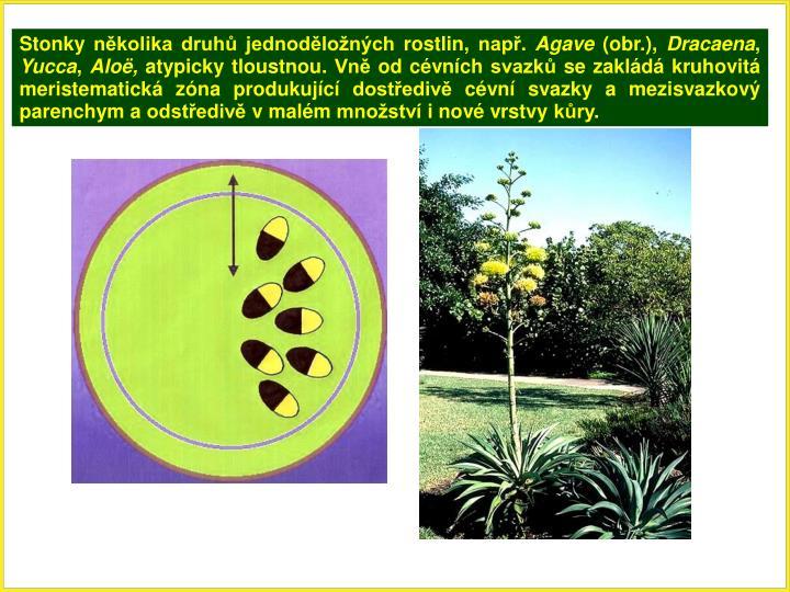 Stonky několika druhů jednoděložných rostlin, např.