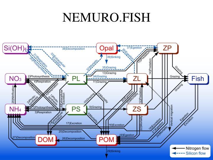 NEMURO.FISH