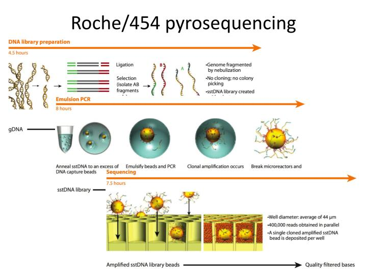 Roche/454 pyrosequencing
