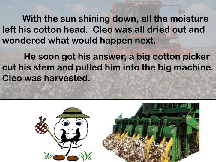 With the sun shining down, all the moisture left his cotton head.  Cleo was all dried out and wondered what would happen next.