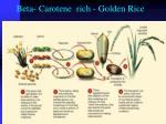 beta carotene rich golden rice
