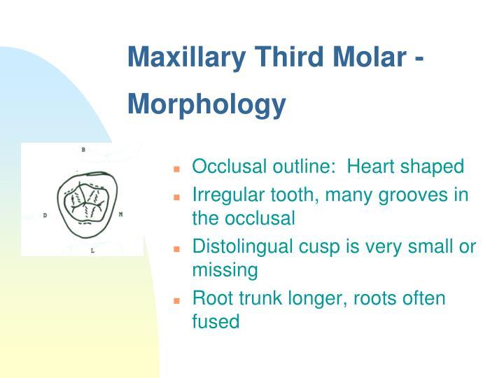 Ppt Molars Powerpoint Presentation Id4524183