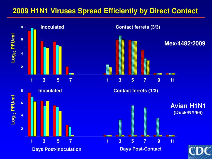 2009 H1N1 Viruses Spread Efficiently by Direct Contact