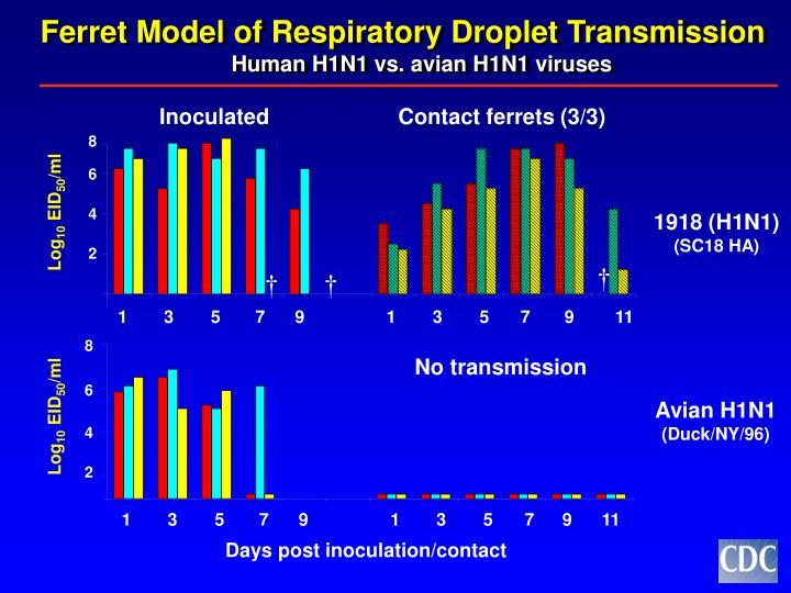Ferret Model of Respiratory Droplet Transmission