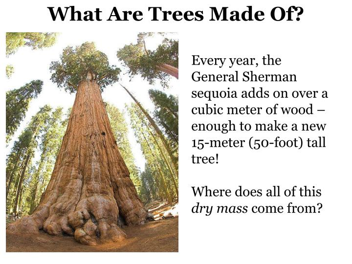 What Are Trees Made Of?