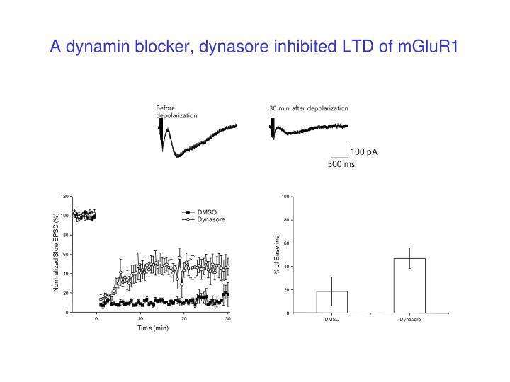 A dynamin blocker, dynasore inhibited LTD of mGluR1