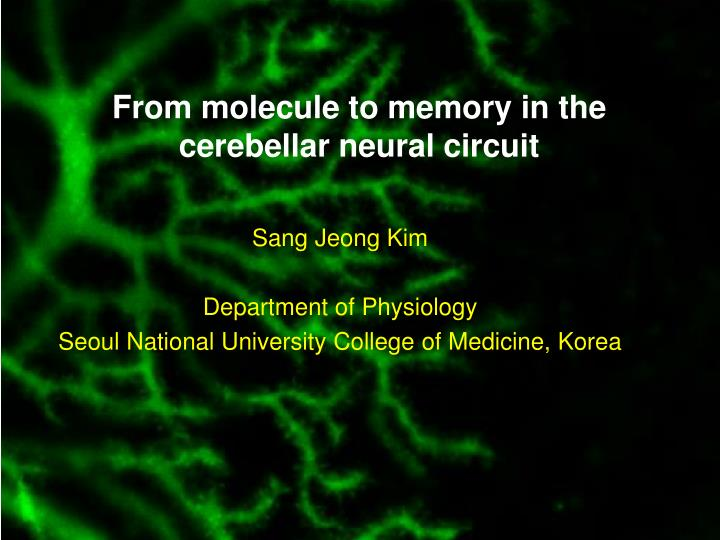 From molecule to memory in the cerebellar neural circuit