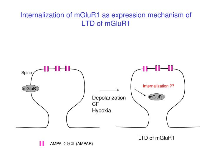 Internalization of mGluR1 as expression mechanism of LTD of mGluR1