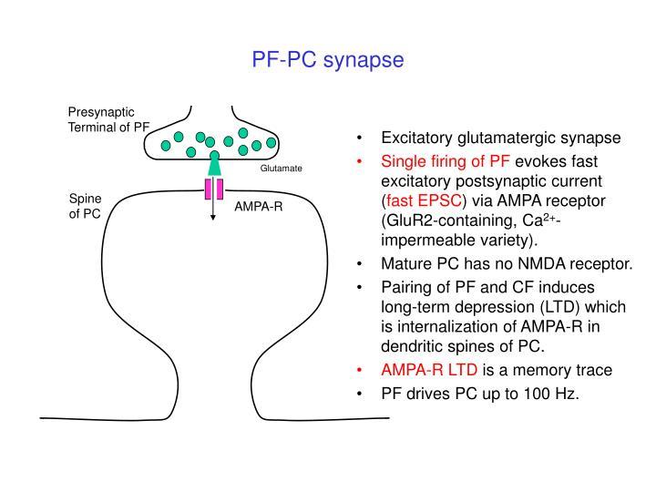 PF-PC synapse