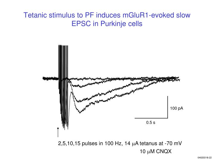 Tetanic stimulus to PF induces mGluR1-evoked slow EPSC in Purkinje cells