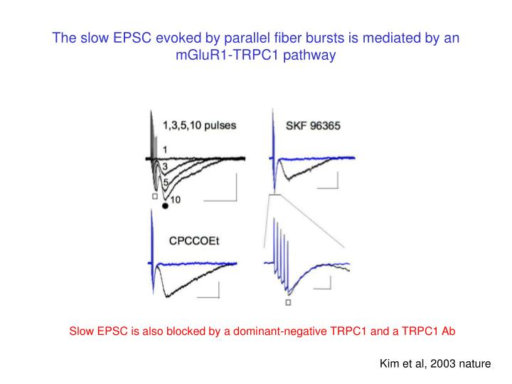 The slow EPSC evoked by parallel fiber bursts is mediated by an mGluR1-TRPC1 pathway