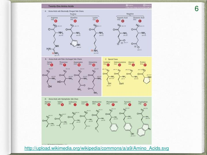 http://upload.wikimedia.org/wikipedia/commons/a/a9/Amino_Acids.svg