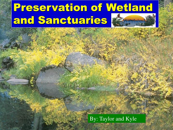 an essay on preservation of wetlands Wetlands are complex ecosystems and encompass a wide range of inland, coastal and marine habitats they share the characteristics of both wet and dry environments and show immense diversity based on.