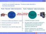 i ruoli in un modello federato fornitore delle identit e fornitore dei servizi