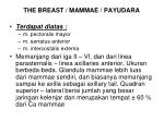 the breast mammae payudara