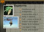 bagworms