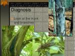 diagnosis3