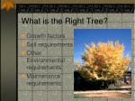 what is the right tree
