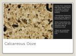 calcareous ooze