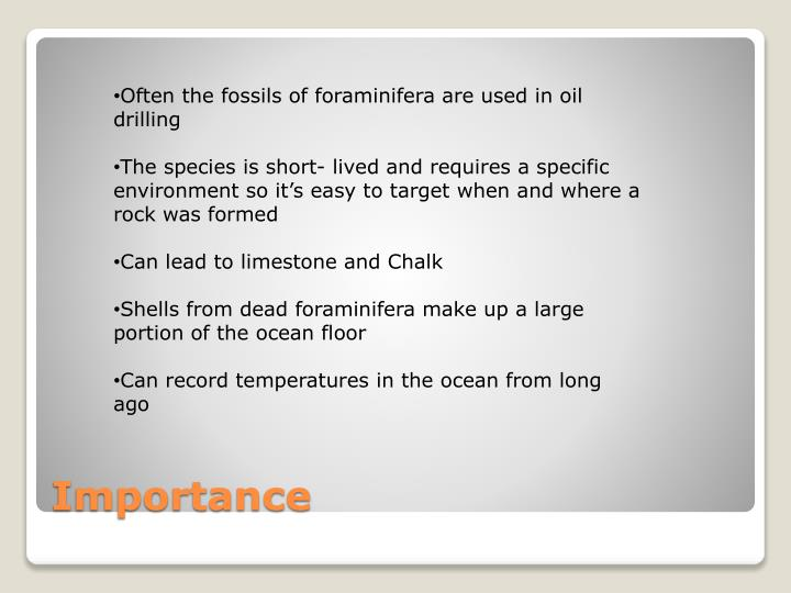 Often the fossils of foraminifera are used in oil drilling