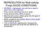 reprodution for multi cellular fungi good conditions