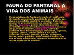 fauna do pantanal a vida dos animais