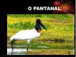 o pantanal1
