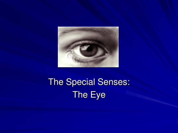 the special senses the eye n.